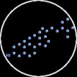 Beta Sitosterol
